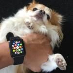 applewatchfeature